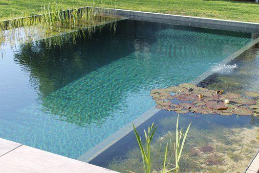 Grundlagen Wasseraufbereitung Schwimmteich
