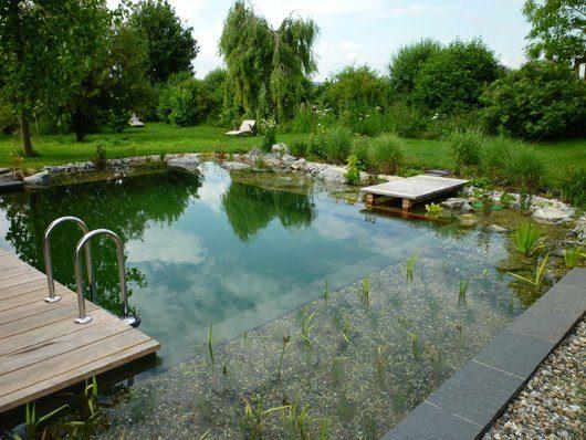 Wasseraufbereitung Schwimmteich Naturpools Wasserpflanzen