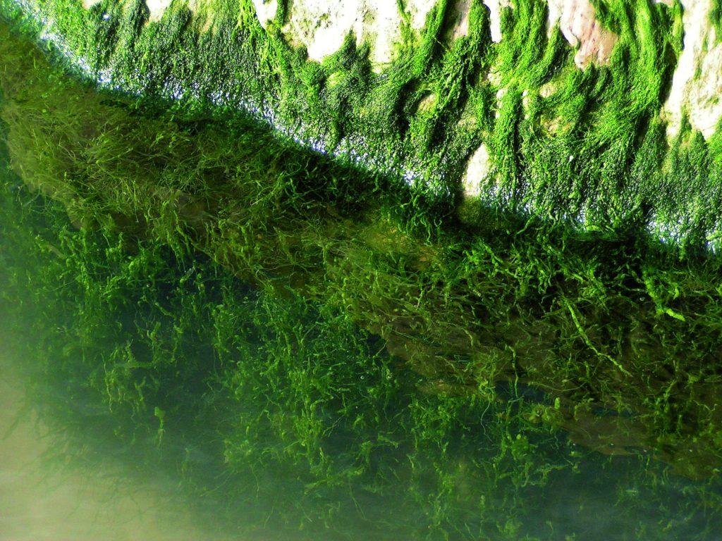 Trübes Poolwasser Algen Poolpflege